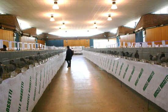 Mostra sociale colombofila toscana empoli 2011 for Mostra palazzo delle esposizioni